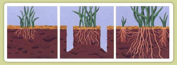 St. Louis Core Aeration | D & S Lawn Service | 314-968-4300